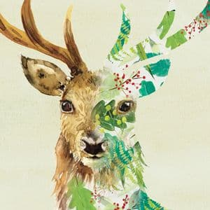 BN11  Stag Blank Greeting Card